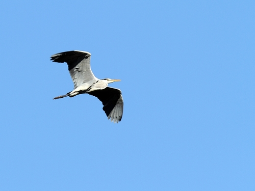 Img_0124s_r