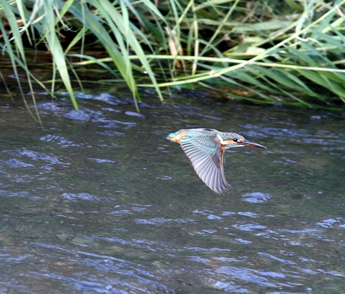 Img_1005a_r
