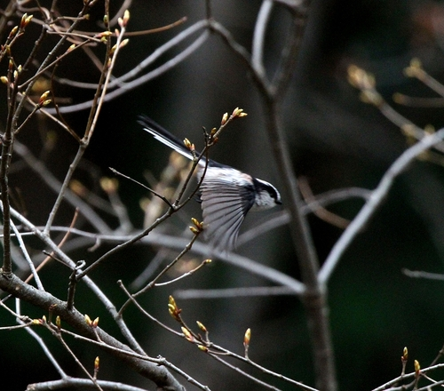 Img_8406a_r